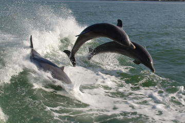 Book St. Pete Beach Dolphin Racer Speedboat Adventure on Viator