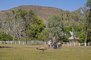 Yura Udnyu - Wilpena Pound Aboriginal Cultural Walk