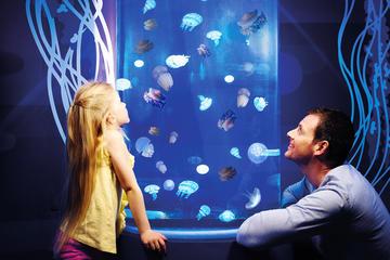 Gardaland SEA LIFE Aquarium Skip-the-Line Entry Ticket