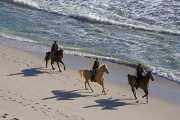 Horseback Riding Tour from Punta Cana