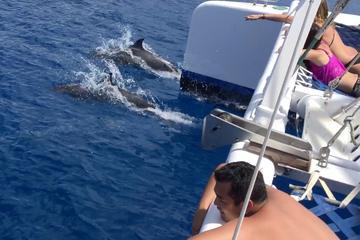 Dolphin Watch Catamaran Sailing Cruise off the Coast of Maui