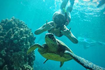 West Maui Snorkeling Adventure