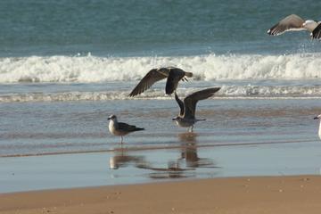 El Rocio, Donana Natural Park und Matalascanas Beach Tagesausflug von...