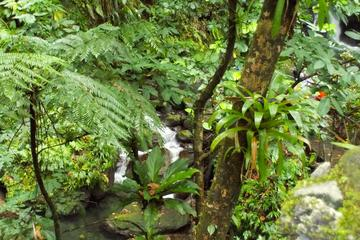 St Kitts  Rainforest Tour