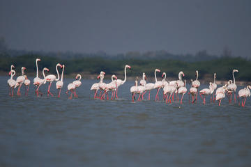 Private Bird Watching Experience in Dubai