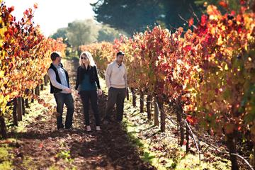 Excursão de um dia de produção de vinho em Napa e Sonoma com...