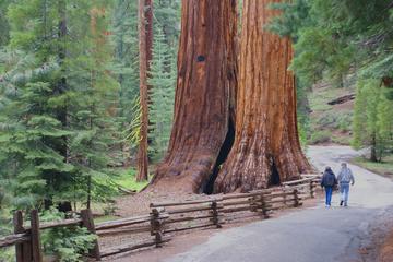 Excursion de deux jours dans le parc national de Yosemite, au départ...