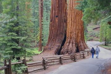 Tour di 2 giorni del Parco Nazionale di Yosemite con partenza da San