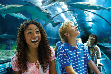 SeaWorld San Diego Day Tour from...