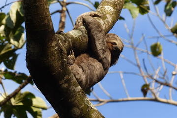 Santa Cruz Sloth and Wildlife Tour