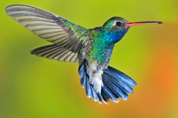 11-Day Birdwatching Tour from Cancun
