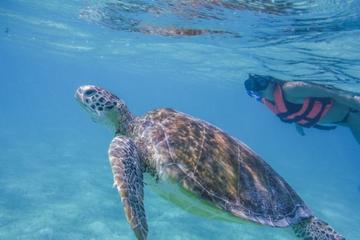 Découverte des tortues à Cancun...