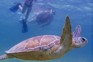 Sortie de plongée avec tuba à la découverte des tortues d'Akamal au...
