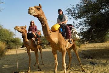 Chandigarh Private Day Trip from New Delhi Including Camel Ride