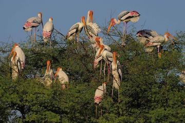 Private Day Trip to Keoladeo National ...