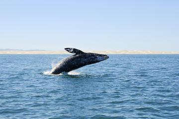 Excursión de día completo con pesca en aguas profundas o avistamiento...