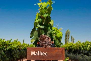 Be a WineMaker for a day in Mendoza