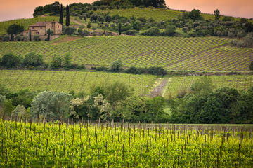 The wine jems of Tuscany: Brunello di Montalcino and Nobile di...