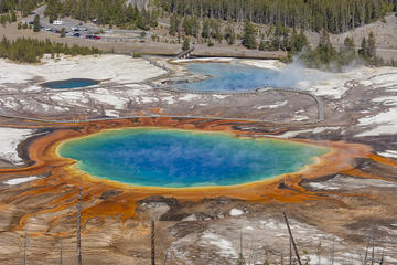 Yellowstone Lower Loop Nature and Wildlife Guided Tour