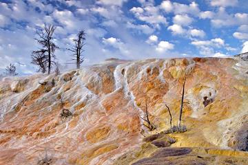 Yellowstone Nature and Wildlife Guided Tour