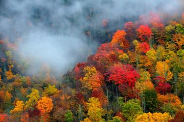 Smoky Mountain Trees of Many Colors Tour with Lunch