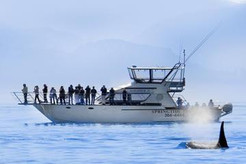 Excursão com Observação de Baleias em...