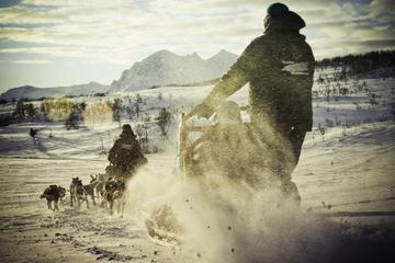 Drive a Husky Sled in Tromso