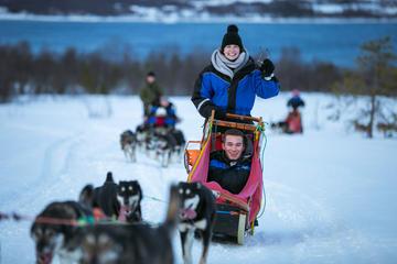 Tromso Husky Sled Driving