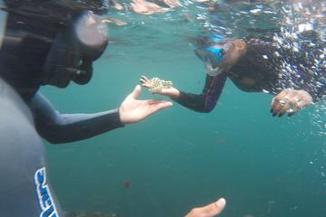 Azores Snorkeling Experience