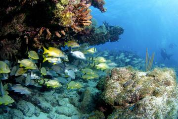 Florida Keys Snorkeling Tour