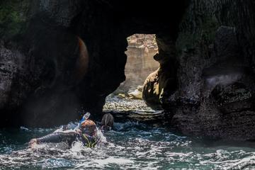 La Jolla Cave Snorkeling Tour