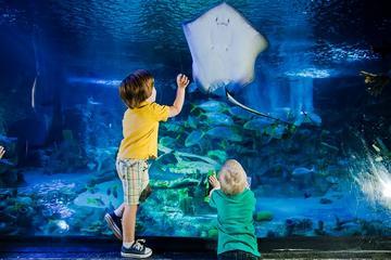 SeaLife London Aquarium with Thames ...