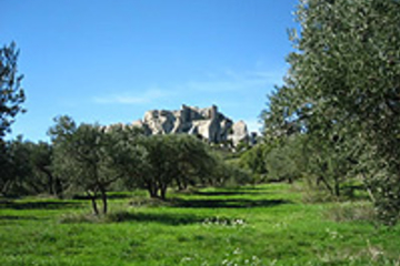 Arles, les Baux et Saint-Rémy-de-Provence au départ de Marseille