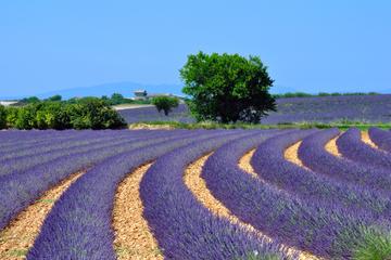 Excursion dans les champs de lavande de Provence et à Aix-en-Provence...