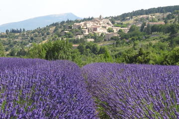 Lavender Tour Sault from Marseille
