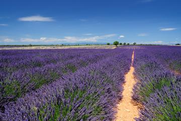 Marseille Landausflug: Private Lavendel-Tour von Aix-en-Provence und...