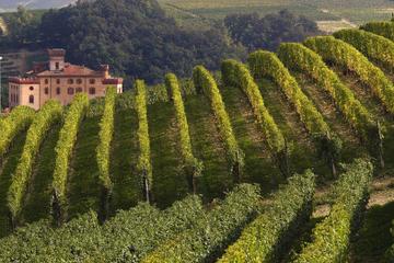 Private Tour: Piemont-Weinprobe in der Barolo-Region
