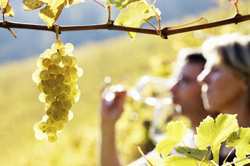 Excursão vinícola pelo Vale do Rhône...