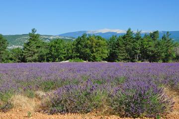Excursion vin dans la Vallée du Rhône depuis Avignon...