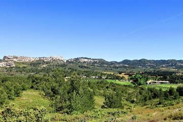 Olive and Wine in les Baux de Provence from Arles