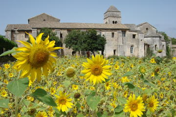 Private Provence Tour: Van Gogh...