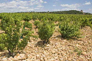 Private Rhone Valley Wine Tour from