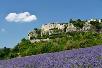 Provence Lavender - Halbtägiger Ausflug in kleiner Gruppe
