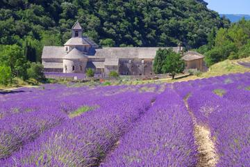 Small Group Provence and Lavender...