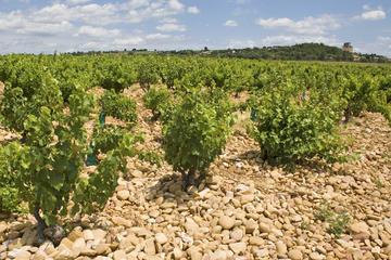 Tour vinícola privado por el valle...