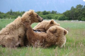 Day Trip Full-Day Sightseeing and Bear Watching Trip near Homer, Alaska