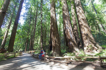 Muir Woods and Sausalito Tour from San Francisco with Bay Cruise