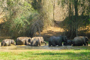 Private Wildlife Safari in Wayanad