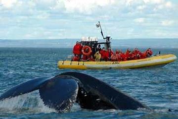 Crociera con osservazione delle balene di un giorno dal Quebec