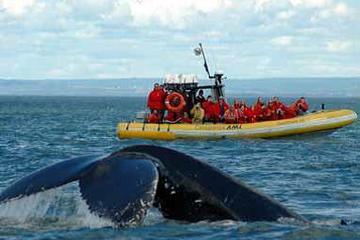 Crucero de avistamiento de ballenas de día completo desde Quebec